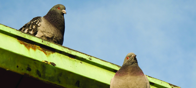 Slider-2-duiven