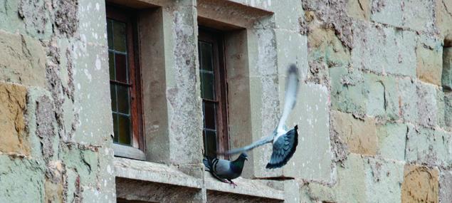 Slider-meer-duiven