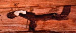 Slider worm